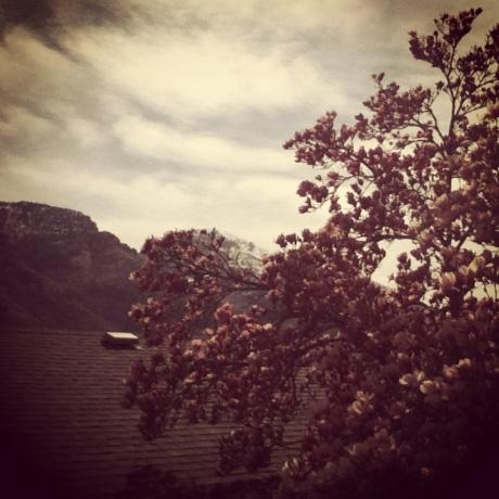 magnolia tree 6.0